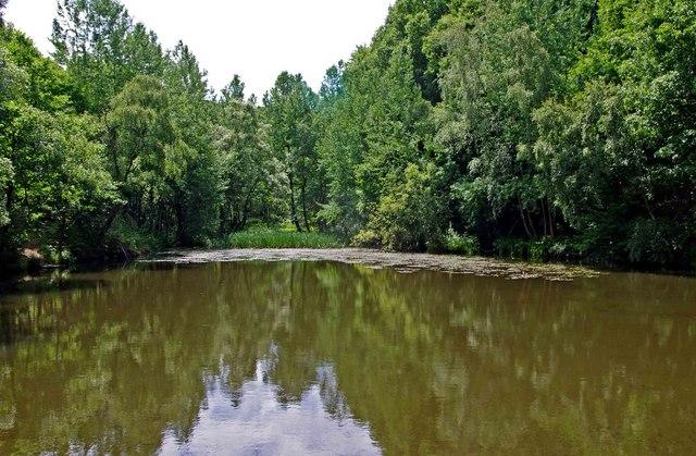 Pond near Uncllys Farm, Wyre Forest (1)