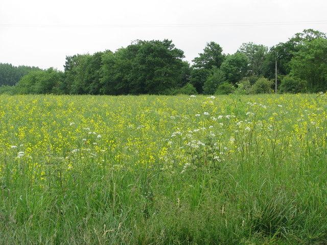 Field near Noke
