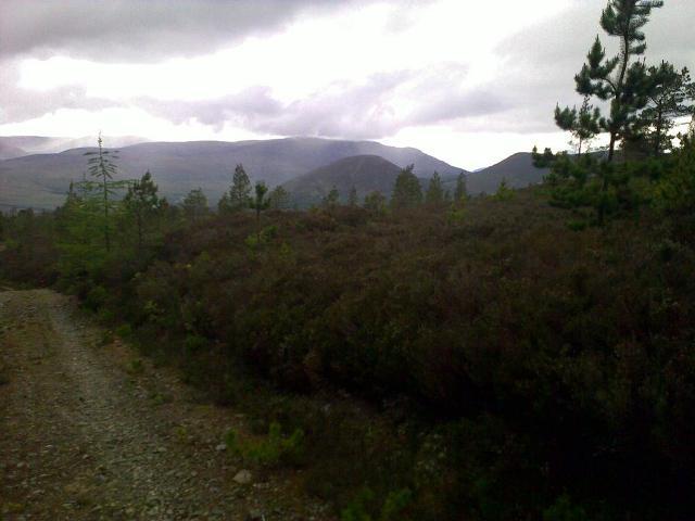 Forest track in the Novar estate