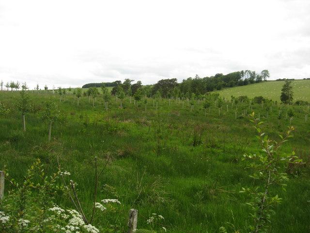 New plantation near Bairnkine Farm