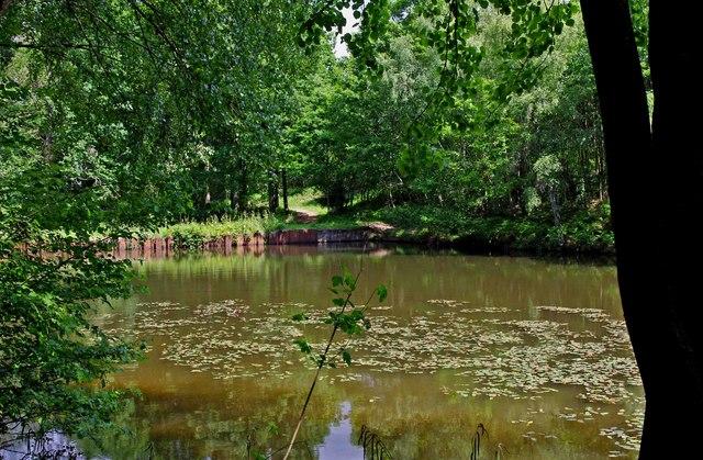 Pond near Uncllys Farm, Wyre Forest (3)