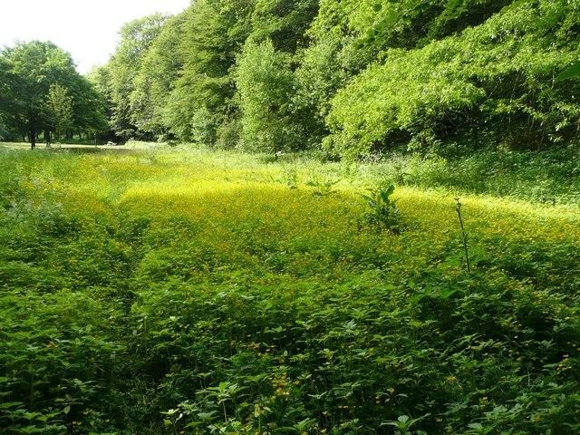 Flood plain of Red Beck, Shibden Park, Northowram