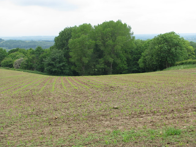 Sloping field near Beckley