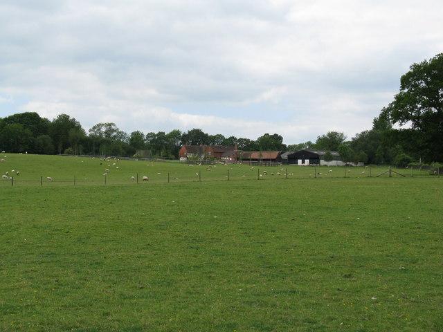 Sheep grazing atTugley Farm