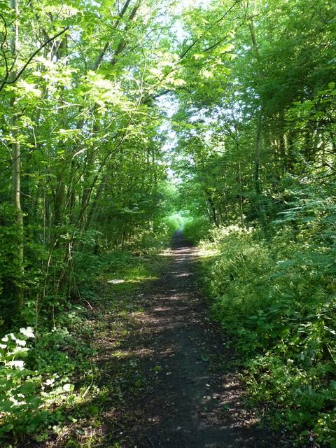 The former railway trackbed at Aldersley