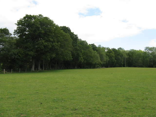 Field surrounded by Tugley Wood