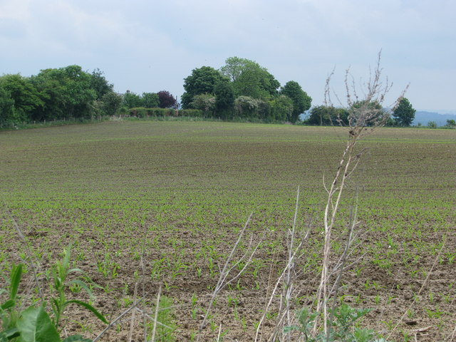 Arable field near Beckley