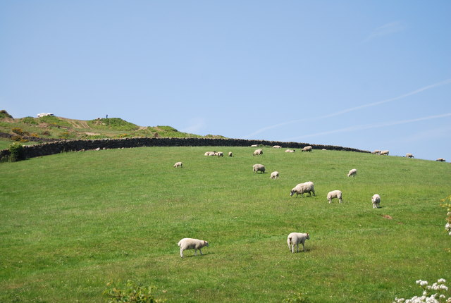 Sheep by the old railway ouyside Robin Hood's Bay
