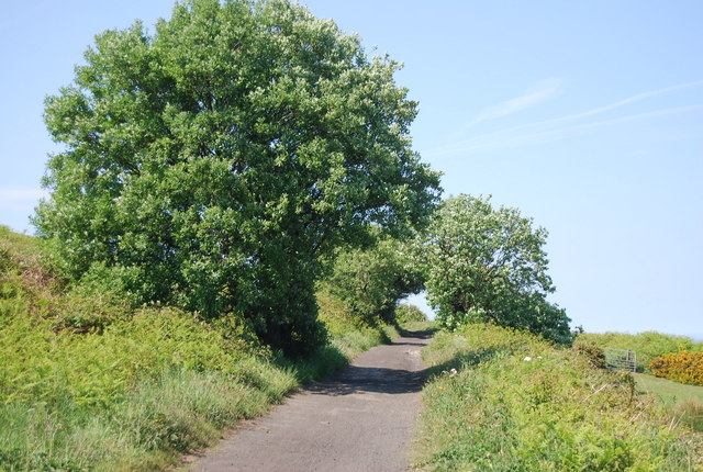 Trees by the old railway line