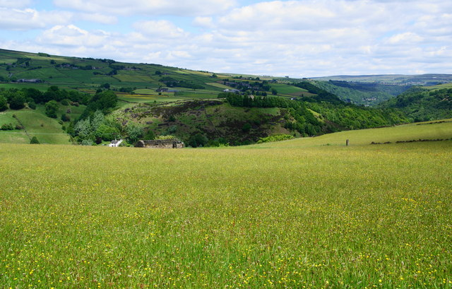 Wild flowers and a ruined barn above Calderdale