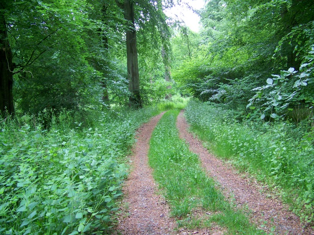 Permissive bridleway, Savernake Forest