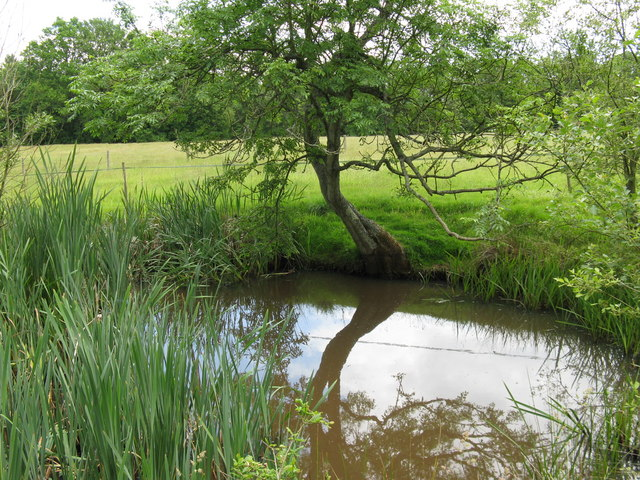 Small pond south of Downlands