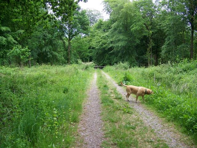 Permissive bridleway, Savernake Forest