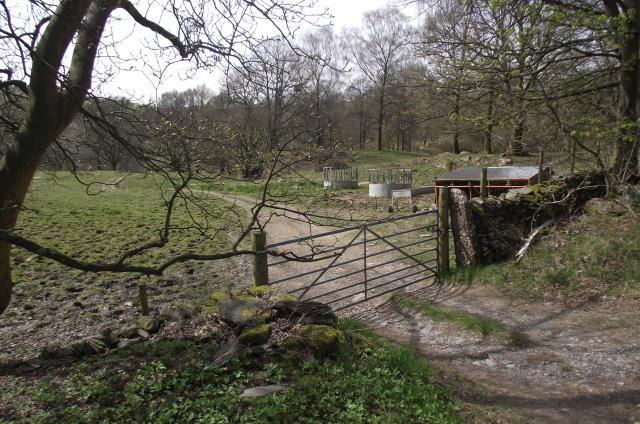 Stock feeding area at Mitchelland Plantation