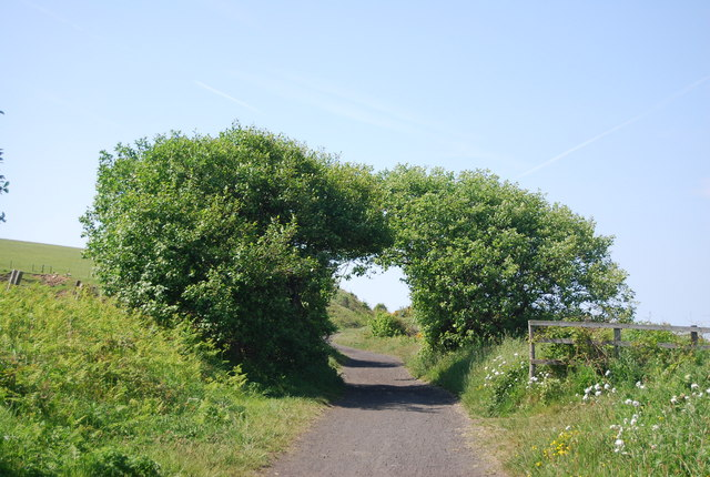 Another arch of trees over the old railway line