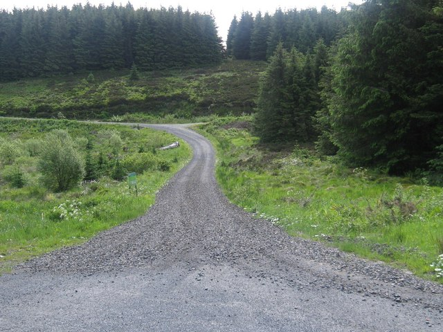 Forestry road at Wauchope Forest