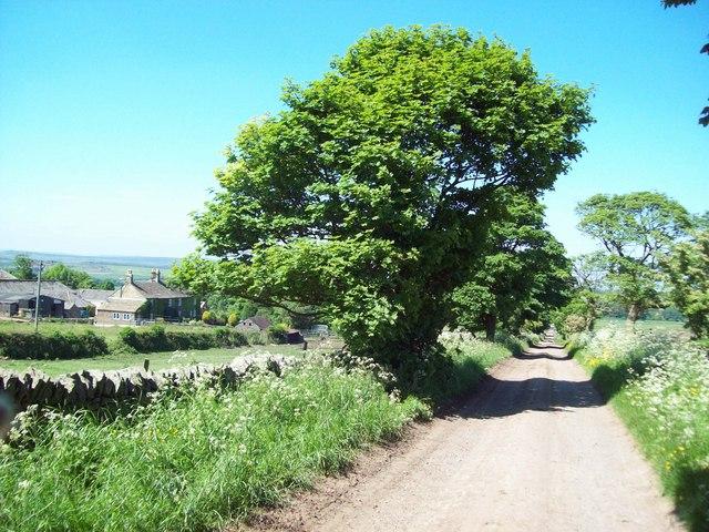 Rodknoll Lane