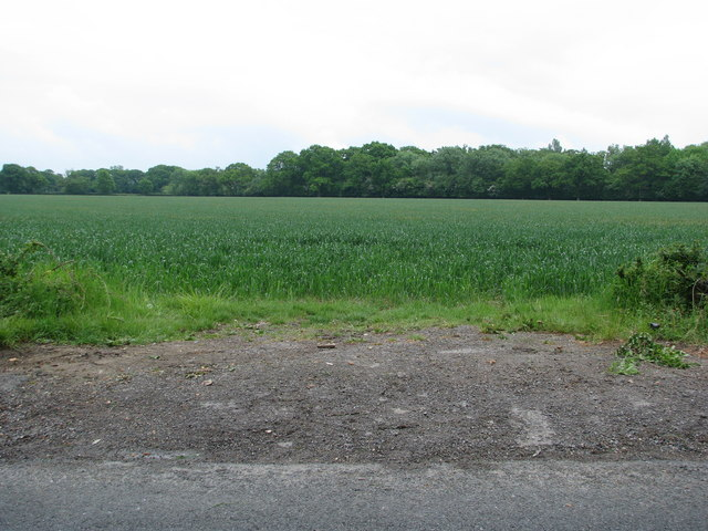 Field by Blackwater Wood