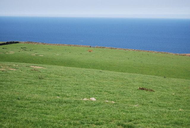 Cliff top pasture