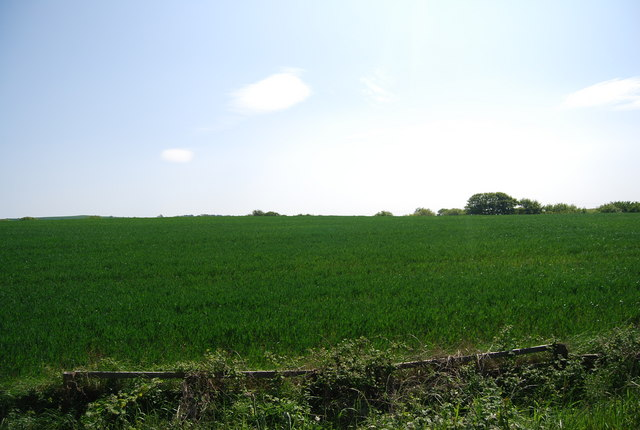A field of wheat by the old railway line