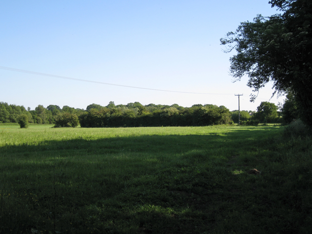 Partial hedge west of Pinley Hill