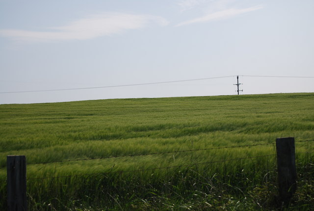 Wheat field by the old railway