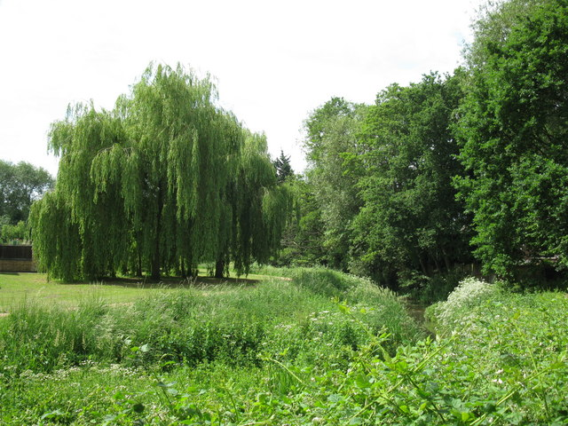 Trees by Cove Brook