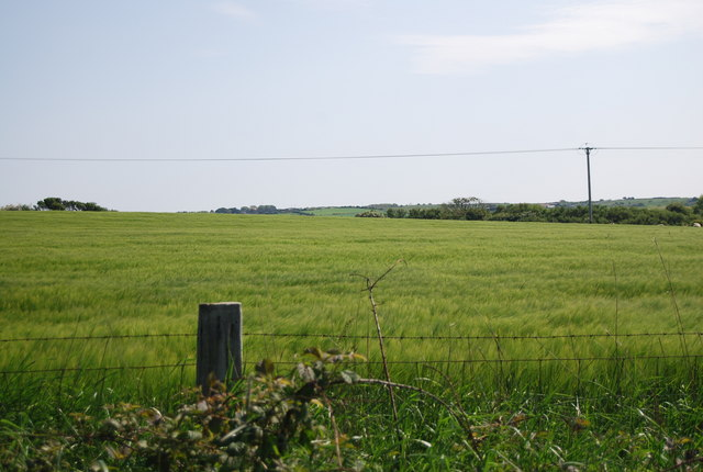 Wheat by the old railway