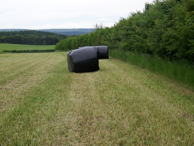 Silage making near Wickham