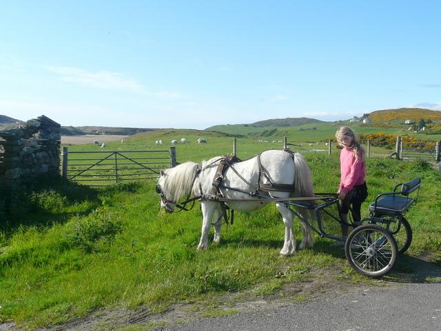 Pony and Trap, at Invernaver