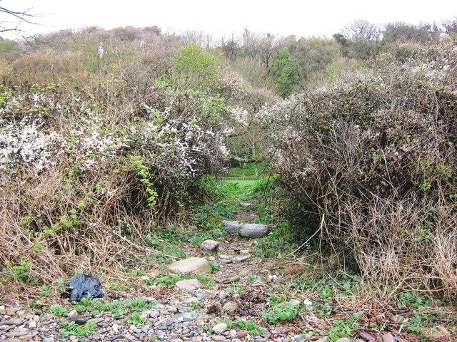 A path through the bushes