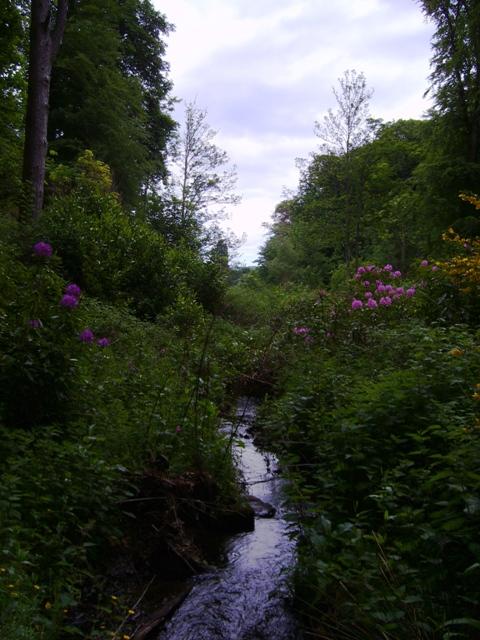 Woodland at Haughmuir