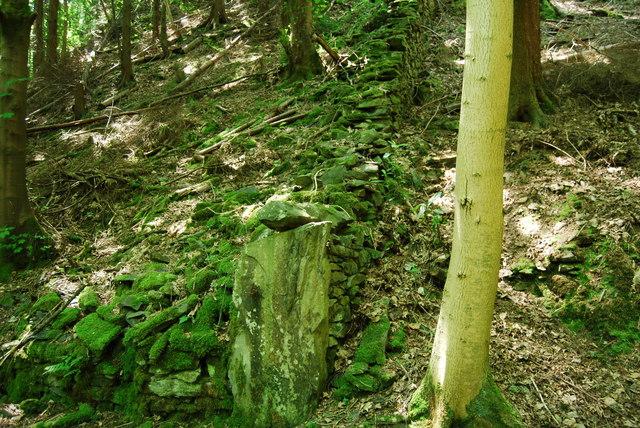 Field boundary dyke hidden amongst the trees