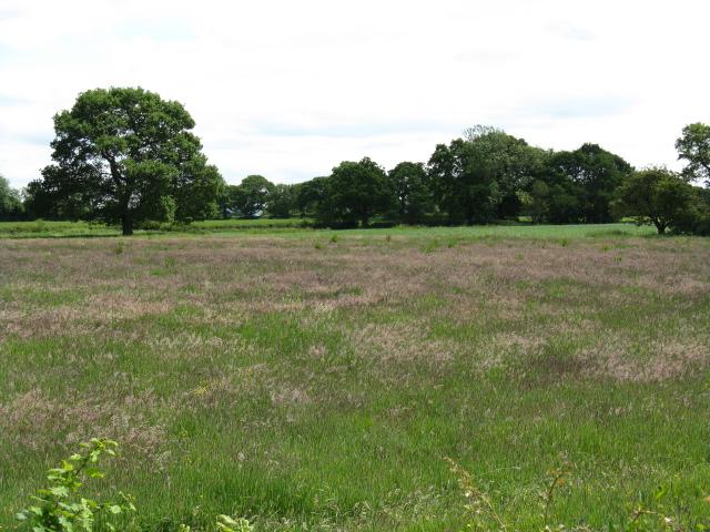 Fields adjoining Newcastle Road (A50), Brereton Green