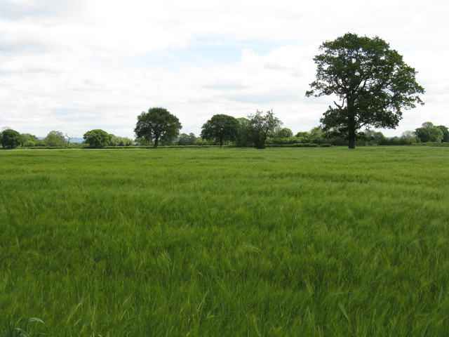 Fields adjoining Davenport Lane (1)