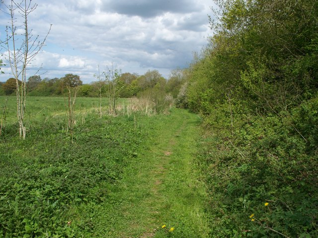 Footpath by the hedge