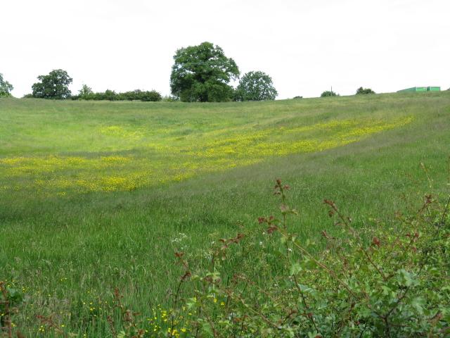 Fields adjoining Mill Lane