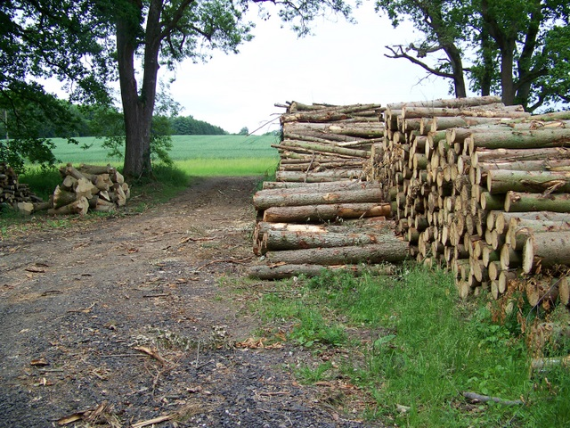 Timber stacks, Old Hayward Bottom