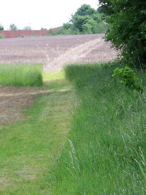 Footpath, Bottom Copse