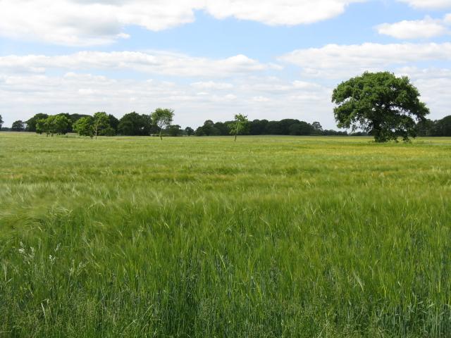 Fields adjoining Smethwick Lane