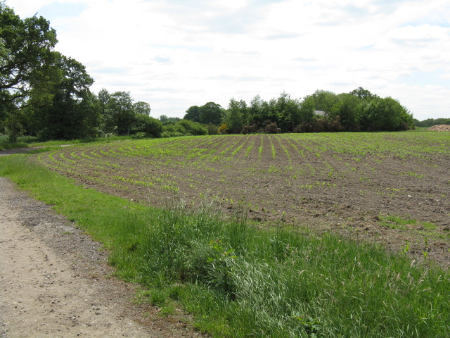 Fields south of Mill Lane
