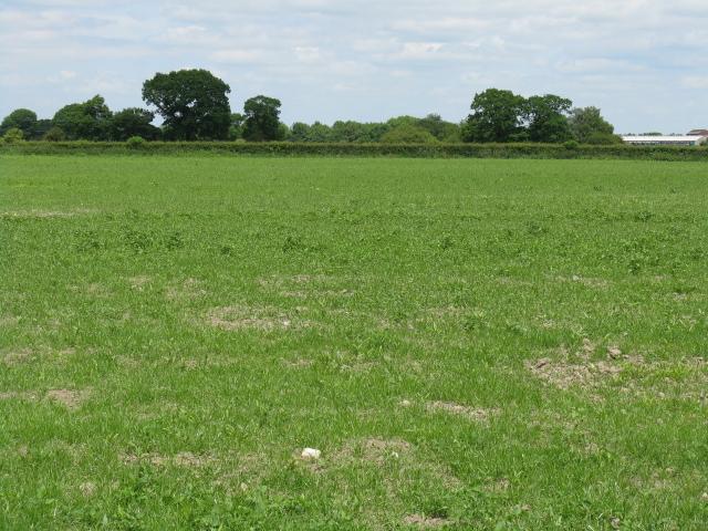 Field adjoining the A54, Sandlow Green