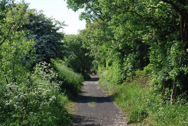 A wooded railway cutting