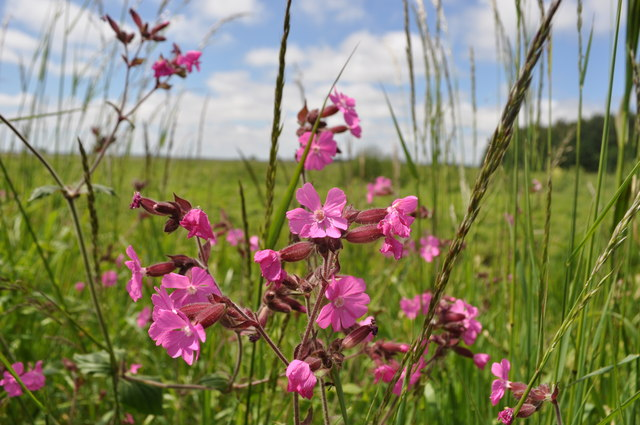 Pink Flowers in the Marshland