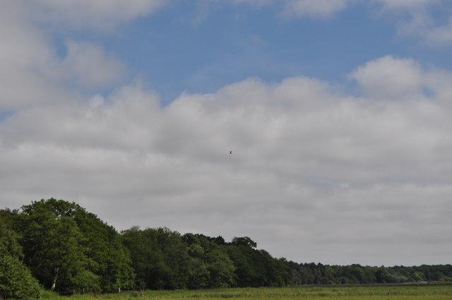 Woodlands and Marsh Harrier