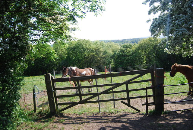 Horses by the old railway line