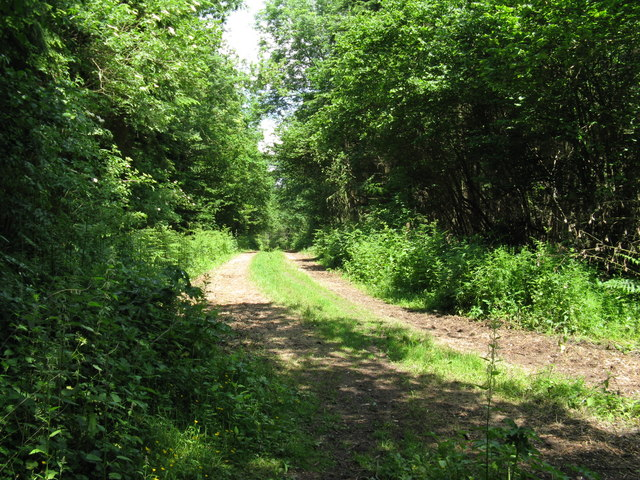 Woodland track north through Fisherlane Wood