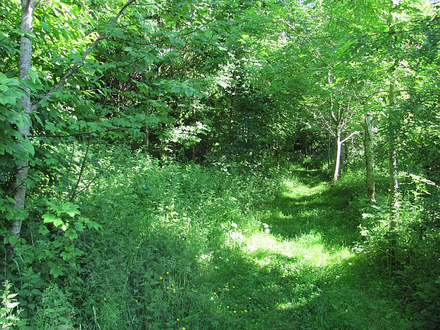 Path, Ninewells