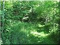 Dist:0.5km<br/>Wooded path near Chirnsidebridge.