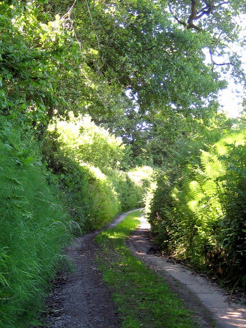 Track above St Mary's Corscombe